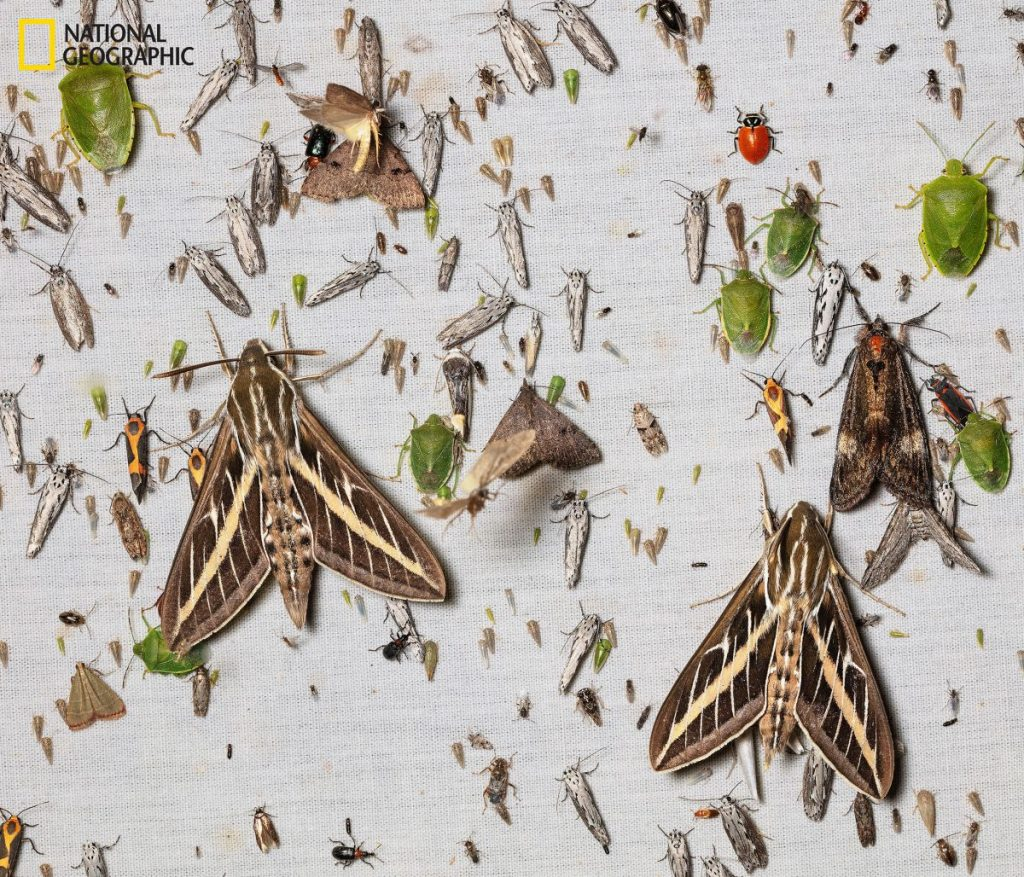 แมลง, กับดักจับแมลง, แมลงหายไปไหน, ความสำคัญของแมลง, แมลงผสมเกสร