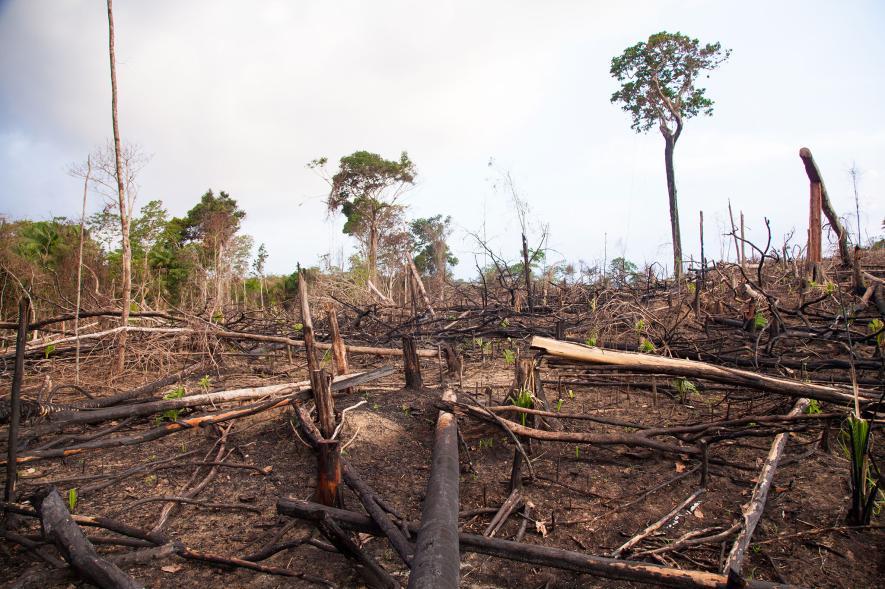 โรคระบาด, ป่าฝน, การตัดไม้ทำลายป่า