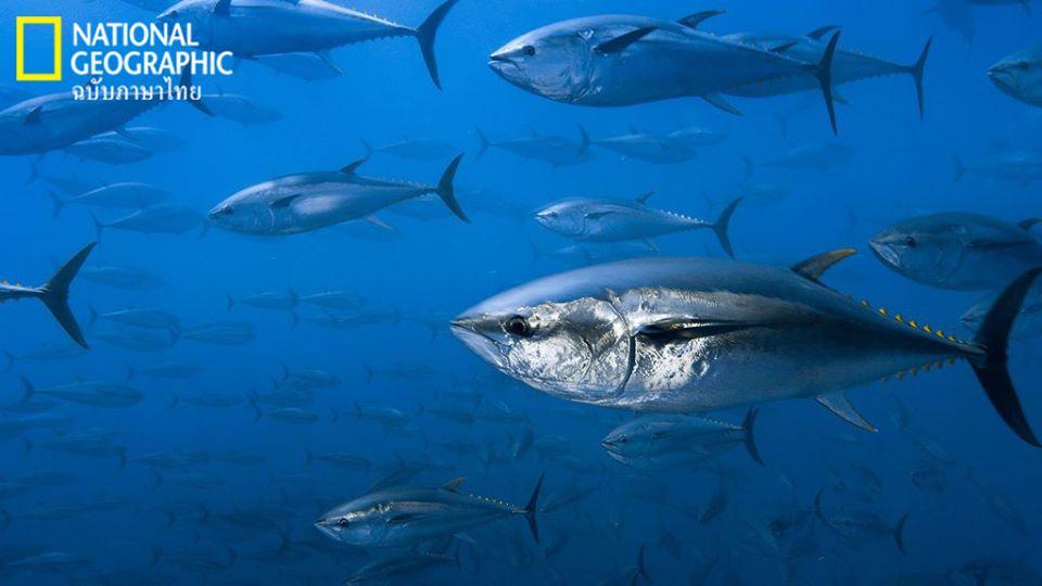 Virtual tour, ดำน้ำ, ฝูงปลา