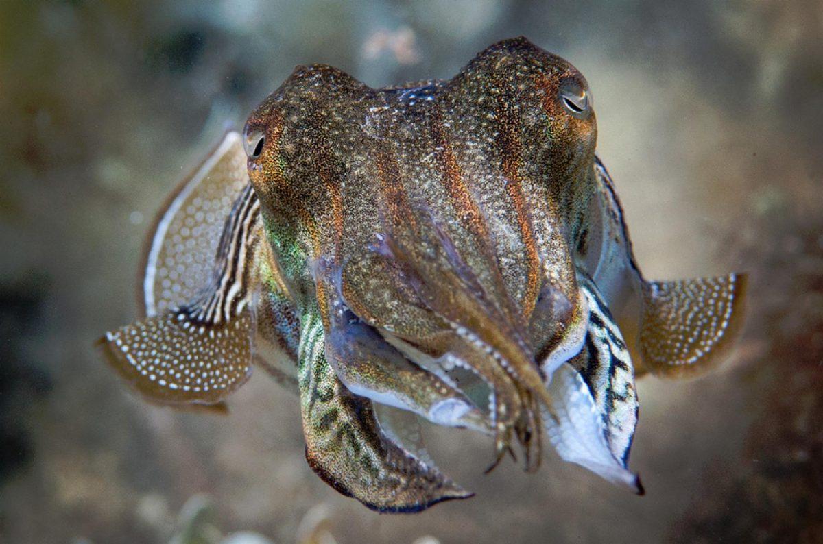 มอลลัสกา, หอย, หมึก, อาณาจักรสัตว์