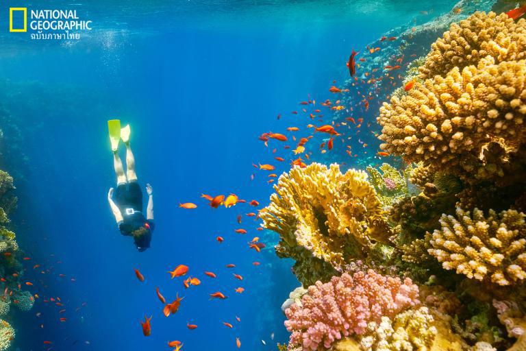 ชายหาดตะวันออกกลาง, อียิปต์, ดำน้ำ