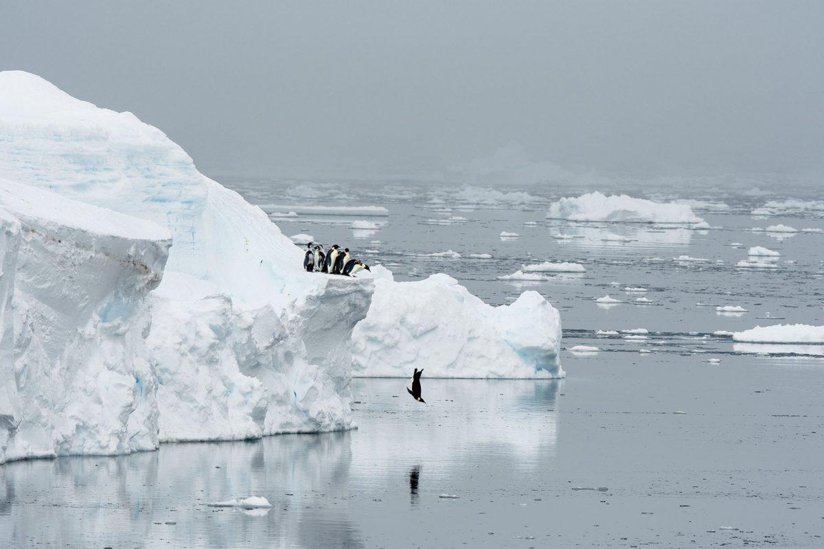 เพนกวิน, เพนกวินจักรพรรดิ, ขั้วโลก, น้ำแข็งขั้วโลก