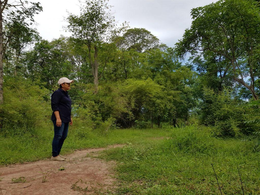 การอาบป่า, อาบป่า, ท่องเที่ยว, ท่องเที่ยวไทย, กาญจนบุรี