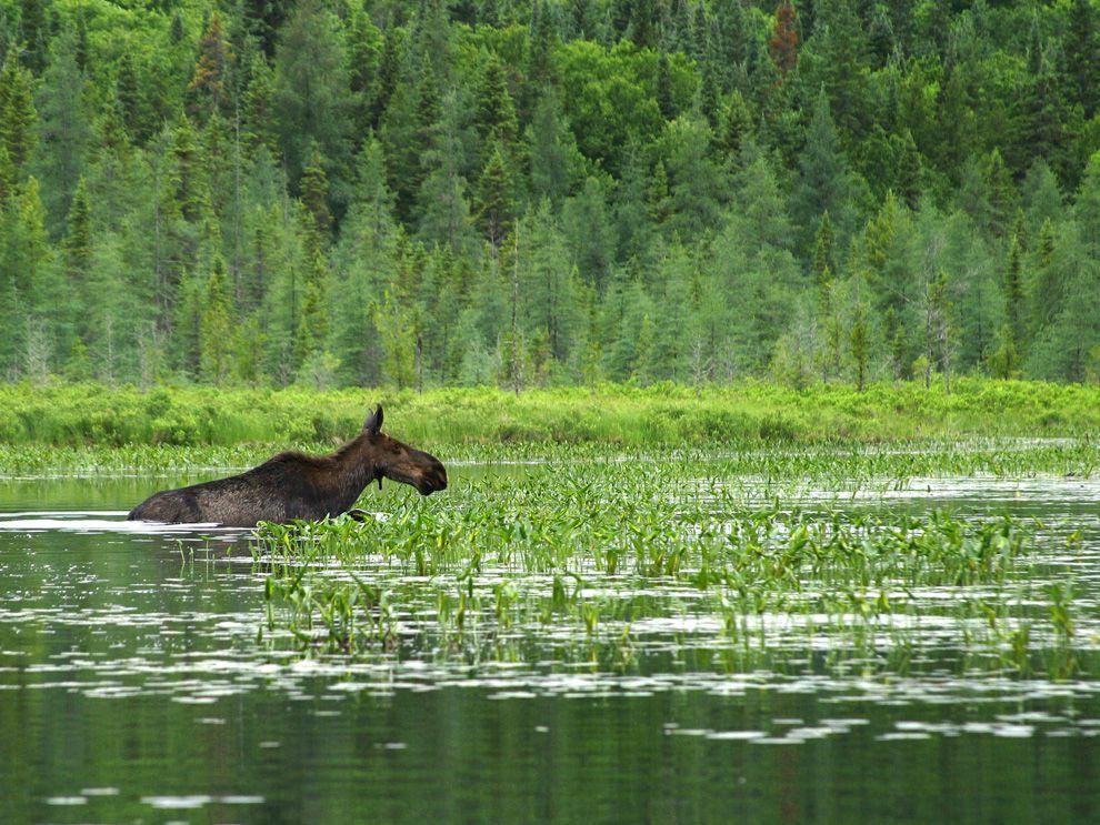 พื้นที่ชุ่มน้ำ, wetland, ธรรมชาติ, ความหลากหลายทางชีวภาพ