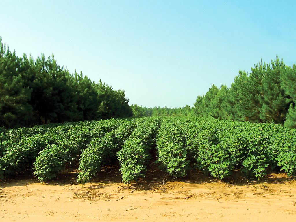 ความอุดมสมบูรณ์ของดิน, การปรับปรุงดิน, พืชปรับปรุงดิน, ดิน, ทรัพยากรดิน
