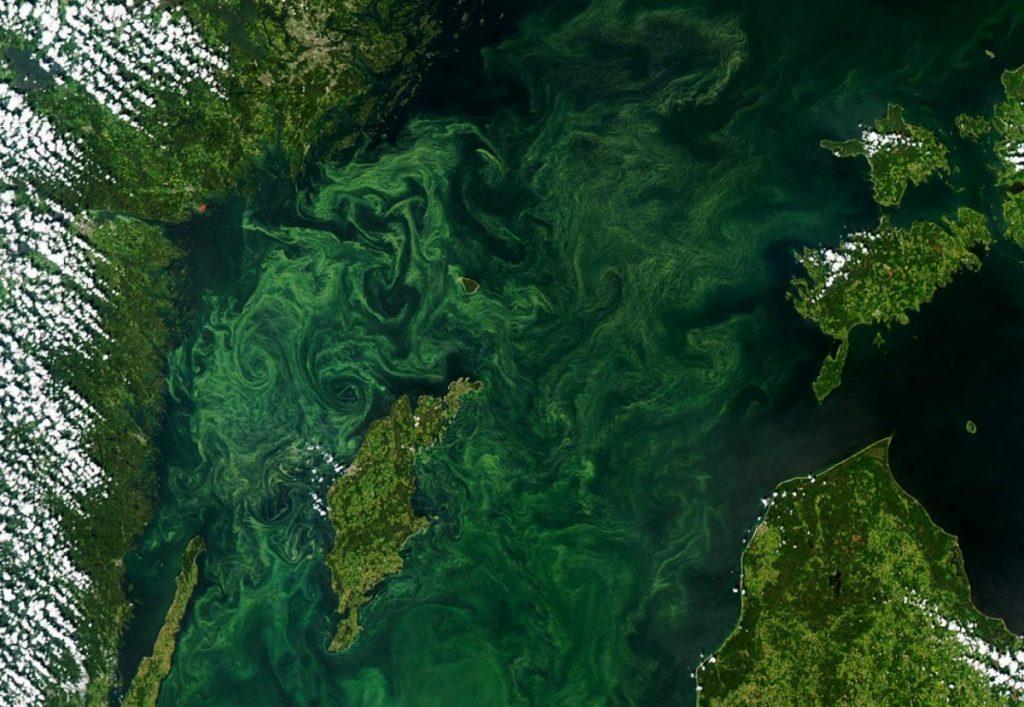 ปรากฏการณ์ยูโทรฟิเคชัน, สาหร่ายสะพรั่ง, มลพิษทางน้ำ, สารหร่ายบลูม
