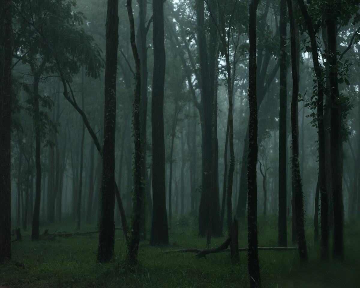สืบ นาคเสถียร, มูลนิธิสืบนาคเสถียร, ผืนป่าตะวันตก, ห้วยขาแข้ง, ทุ่งใหญ่นเรศวร