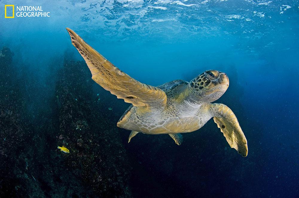 พื้นที่มหาสมุทร, มหาสมุทร, อนุรักษ์มหาสมุทร, เต่าตนุ