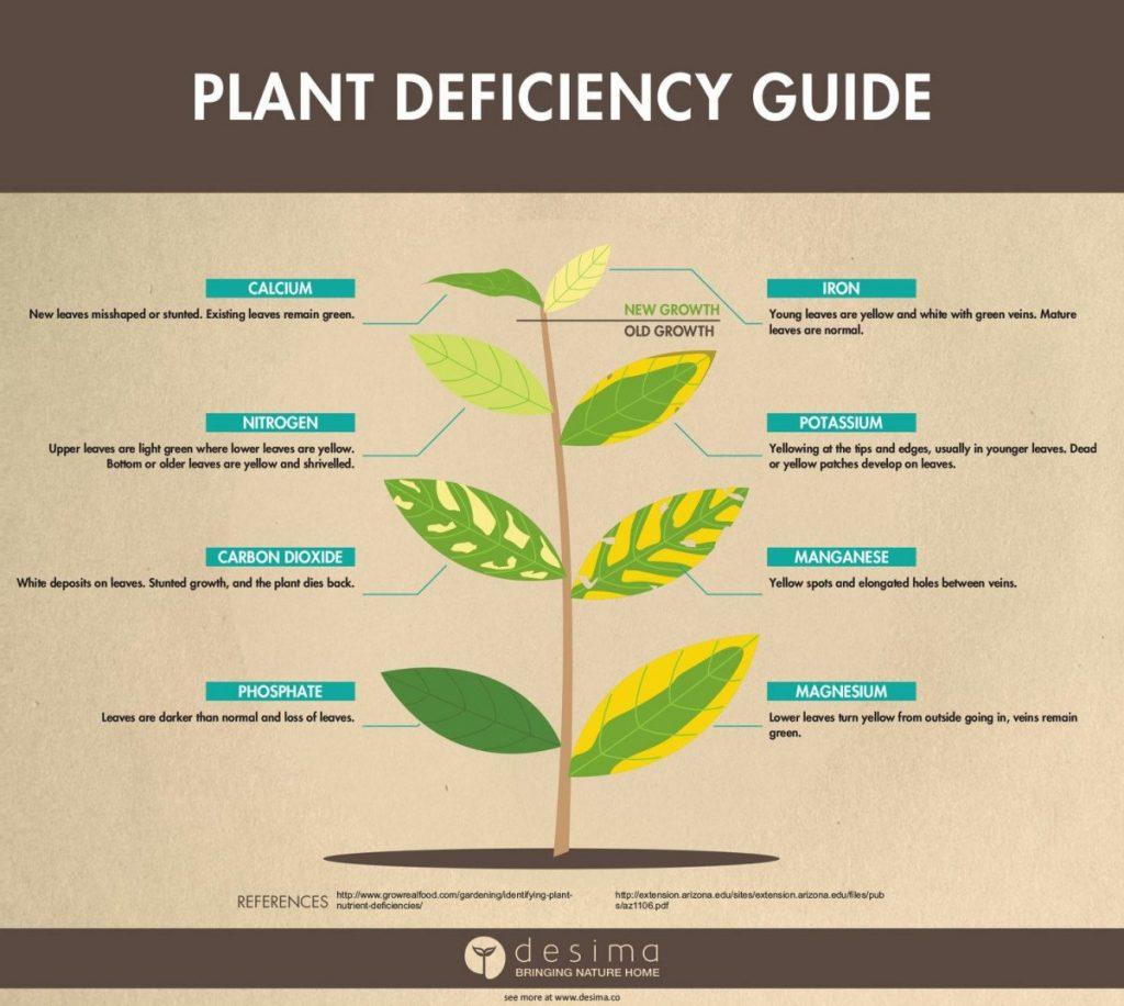 ธาตุอาหารพืช, ธาตุอาหารของพืช, ปุ๋ยเคมี, การเจริญเติบโตของพืช, พืชและผลไม้