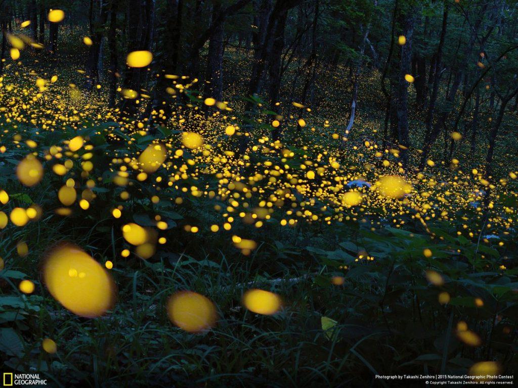 แสง, แสงและสมบัติของแสง, แสงธรรมชาติ, คุณสมบัติของแสง, แสงแดด,