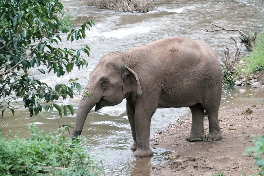 เที่ยวแม่แจ่ม, เชียงใหม่, ปางช้าง, เที่ยวชุมชน, ท่องเที่ยวชุมชน