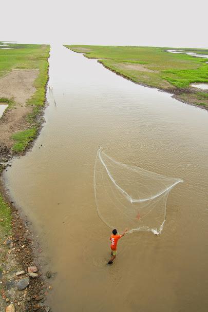 ทะเลน้อย, สางขลา, ทะเลสาบสงขลา, ทุ่งบัวแดงทะเลน้อย, แรสซาร์ไซต์, พื้นที่ชุ่มน้ำ, พื้นที่ชุ่มน้ำของไทย