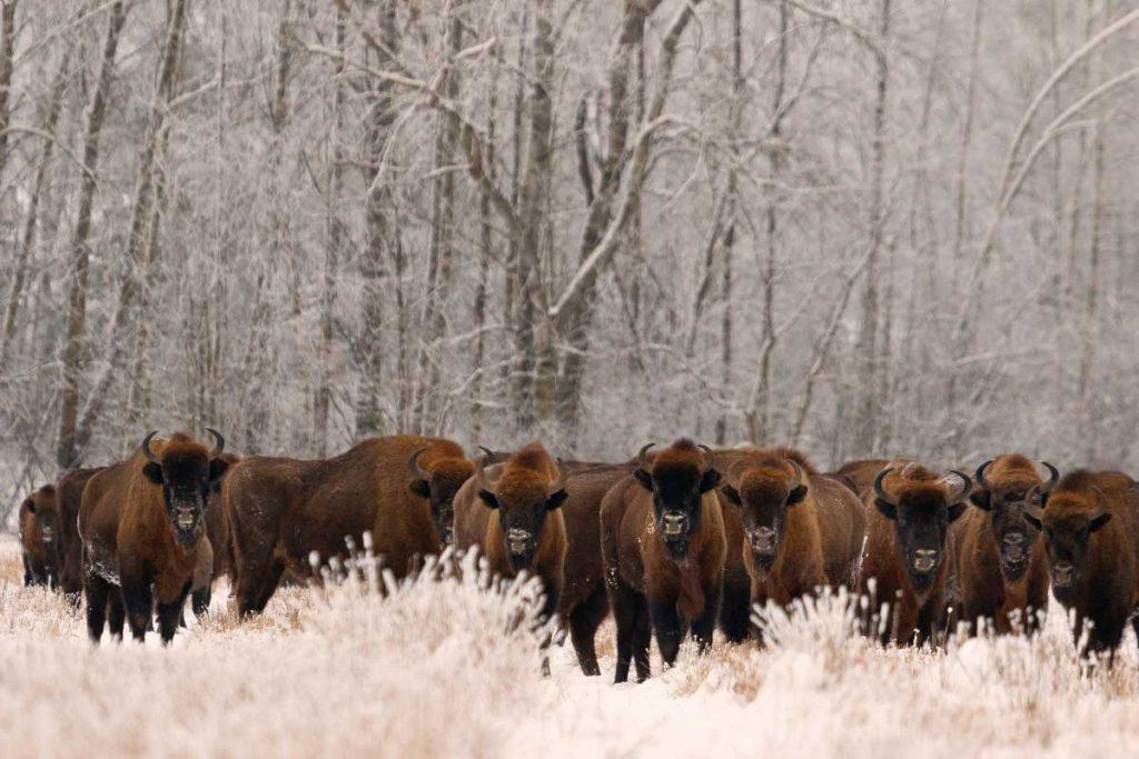 สูญพันธุ์, Red List, บัญชีแดง, IUCN, สัตว์สูญพันธุ์