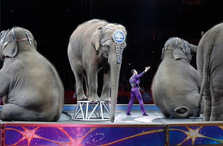 ช้างโชว์, เรื่องราวดีๆ, สัตว์ป่า