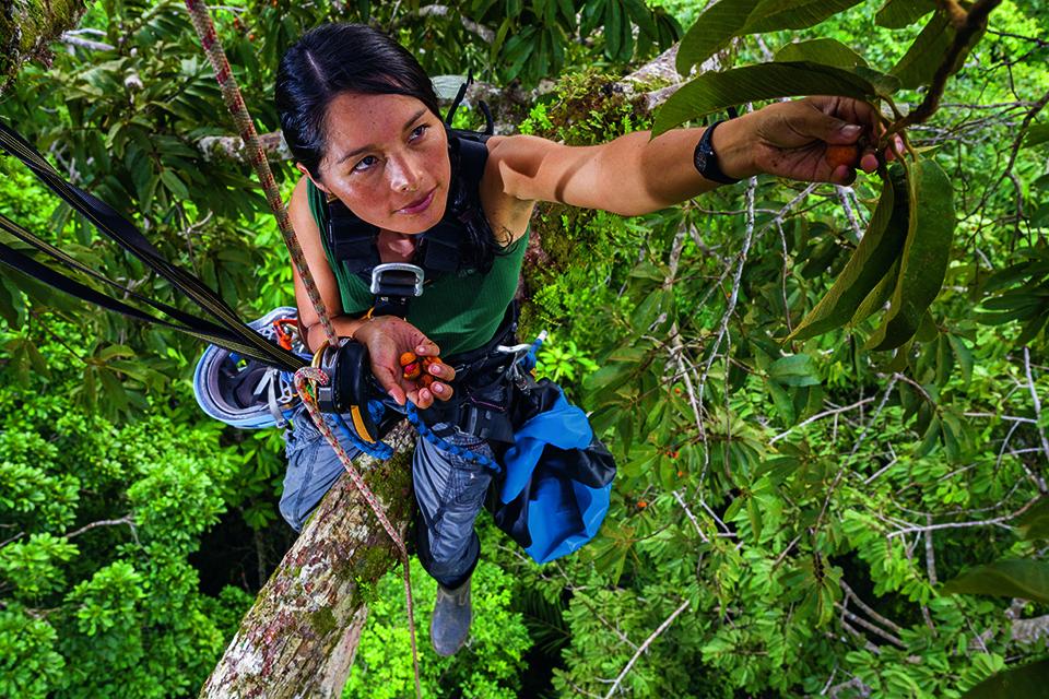 คอสตาริกา, นักพฤกษศาสตร์, ป่าไม้