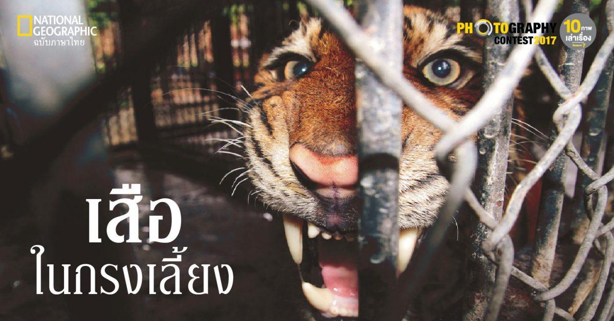 เสือในกรง