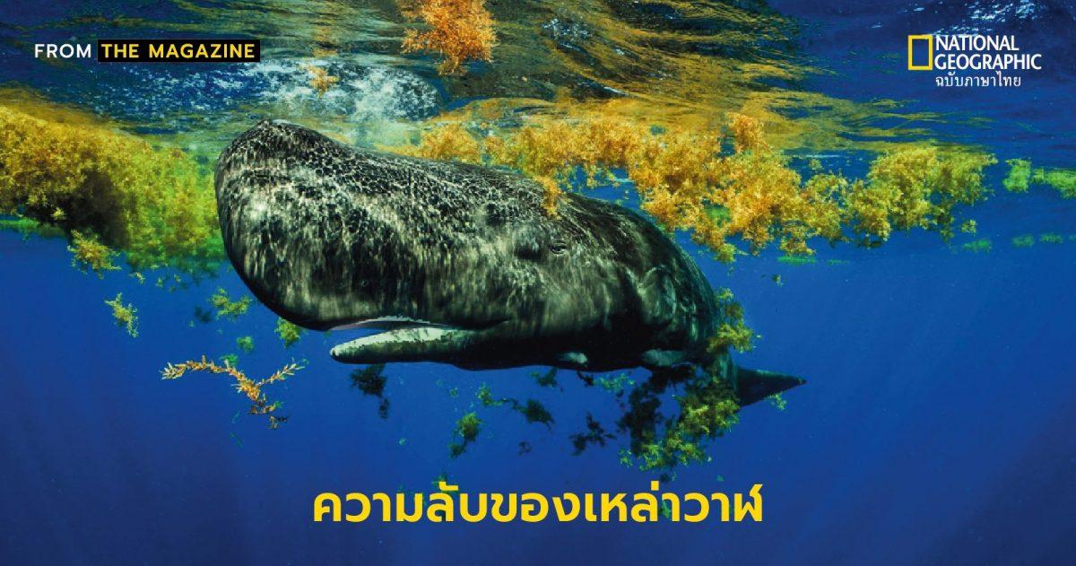 วาฬ, ความลับของวาฬ